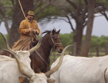 The Cowboys of Tuscany